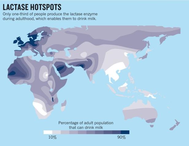 Mapa de la tolerancia a la lactosa. Fuente: http://www.nature.com/news/archaeology-the-milk-revolution-1.13471